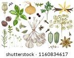 fresh organic colorful hand... | Shutterstock .eps vector #1160834617