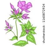 meadow flowers  color vector... | Shutterstock .eps vector #1160872924