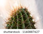 close up of a cactus with sharp ... | Shutterstock . vector #1160887627