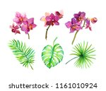 set of exotic leaves and... | Shutterstock . vector #1161010924
