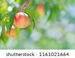 Ripe Peach Close Up With Peach...