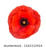 Single Red  Poppy Isolated On...