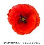 Bright Red Poppy Flower...