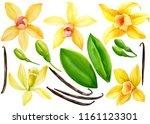 set of vanilla flower  leaves ... | Shutterstock . vector #1161123301