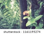 flowers used for decorating the ... | Shutterstock . vector #1161195274