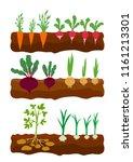 vegetables growing in the...   Shutterstock .eps vector #1161213301