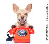 chihuahua dog with glasses as... | Shutterstock . vector #1161213877