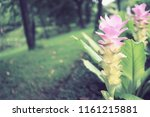flowers used for decorating the ... | Shutterstock . vector #1161215881