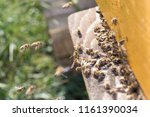 swarm of bees at beehive... | Shutterstock . vector #1161390034