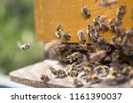 swarm of bees at beehive... | Shutterstock . vector #1161390037