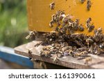 swarm of bees at beehive... | Shutterstock . vector #1161390061