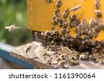 swarm of bees at beehive... | Shutterstock . vector #1161390064