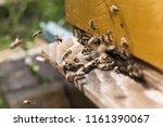 swarm of bees at beehive... | Shutterstock . vector #1161390067