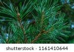 green pine branches | Shutterstock . vector #1161410644