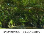 Coral Gables Street Trees In...