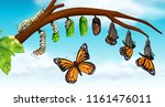 a butterfly life cycle... | Shutterstock .eps vector #1161476011