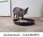 cat is eating food   Shutterstock . vector #1161484891