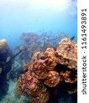 underwater world at koh sa mae... | Shutterstock . vector #1161493891