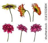 dahlia flower set  related... | Shutterstock .eps vector #1161532804