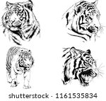 set of vector drawings on the... | Shutterstock .eps vector #1161535834
