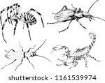 vector drawings sketches... | Shutterstock .eps vector #1161539974