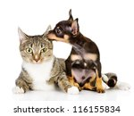 Stock photo dog and cat together the puppy whispers secrets on an ear of a cat isolated on white background 116155834