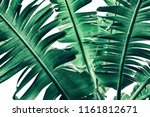 tropical banana palm leaf... | Shutterstock . vector #1161812671