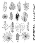 hand drawn set with leaves and... | Shutterstock .eps vector #1161849634