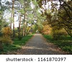autumn sunny day. a path among ...   Shutterstock . vector #1161870397