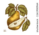 colored pear fruit illustration.... | Shutterstock . vector #1161900964