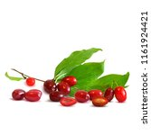 fresh  nutritious and tasty...   Shutterstock .eps vector #1161924421