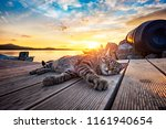 Stray Tiger Cat On The Pier In...