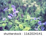 flowers used for decorating the ... | Shutterstock . vector #1162024141