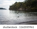 large wild pelican hunts fish... | Shutterstock . vector #1162035961