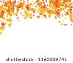 oak  maple  wild ash rowan... | Shutterstock .eps vector #1162039741