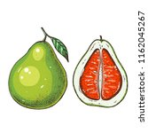 pomelo hand drawn vector... | Shutterstock .eps vector #1162045267