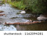 river in jemez mountains | Shutterstock . vector #1162094281