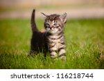 Stock photo adorable tabby kitten outdoors 116218744