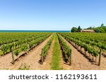 vineyard on tha lake shore of... | Shutterstock . vector #1162193611