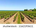Vineyard On The Lake Shore Of...
