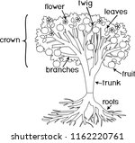 coloring page. parts of plant.... | Shutterstock .eps vector #1162220761