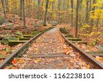 Autumn Forest Scene With Old...