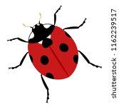 creative ladybug illustration | Shutterstock .eps vector #1162239517