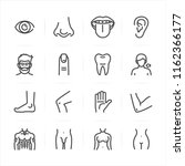 human anatomy icons with white... | Shutterstock .eps vector #1162366177