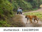 tourist on safari and bengal... | Shutterstock . vector #1162389244