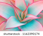 agave leaves in unusual trendy... | Shutterstock . vector #1162390174