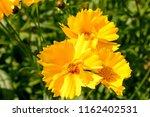 Close Up Of Yellow Daisy...