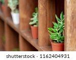mini plants on wooden shelf for ...   Shutterstock . vector #1162404931