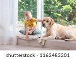 adorable yellow labrador... | Shutterstock . vector #1162483201