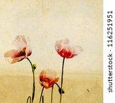 red poppy on grunge background | Shutterstock . vector #116251951